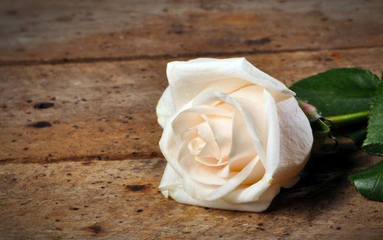 La Rosa – Belleza Atormentada, Ana Coello