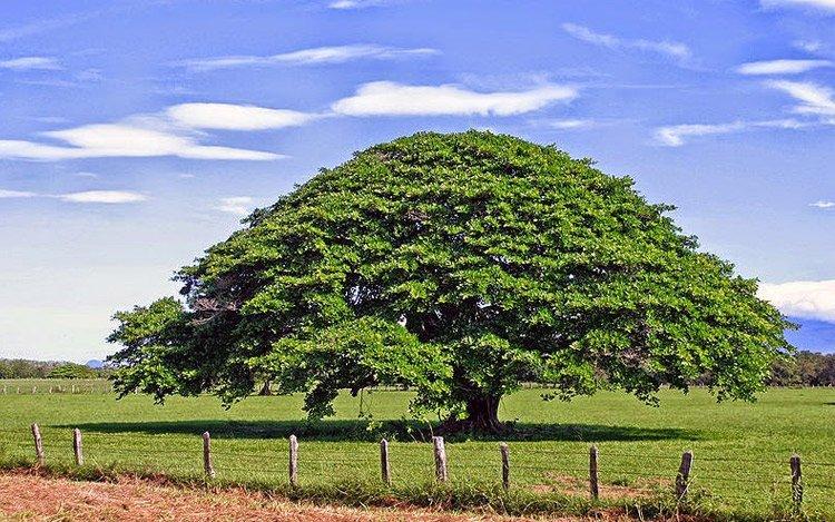 ¿ Y si imitamos al árbol?