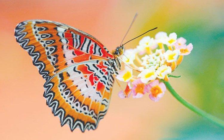 Donde vuelan las mariposas , Andrea Adrich