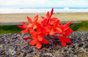 Playa Jacó Puntarenas - #CostaRica